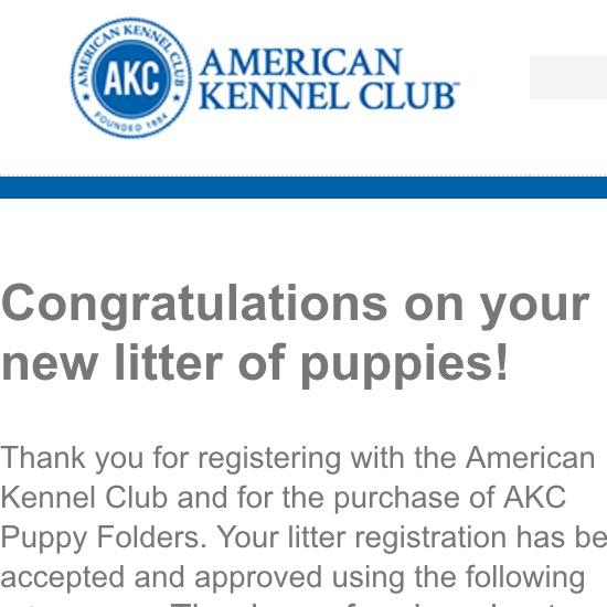 AKC Registration – Stardust Labradors